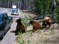 1969 08 Yellowstone bears Gary Smith and 1960 blue bug 01
