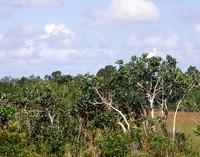 1969 Everglades white bird 01