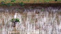 1969 Everglades white bird 02