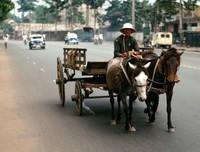 1969 Saigon horse cart and driver 01