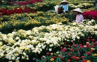 1970 02 01 Saigon flowers 01