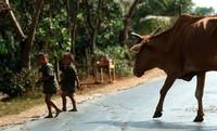 1970 03 12 near Saigon kids and cow 01