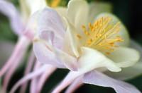 1971 06 05 flower 02
