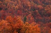 1973 10 27 Shenandoah fall colors 01