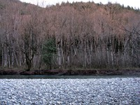 snoqualmie river trees
