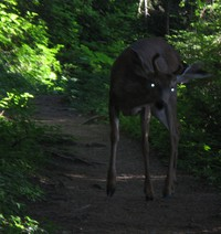 spooky deer