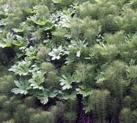 tiger mtn plants