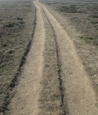 track at sonoma coast state beach