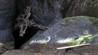tree hiding at Cape Flattery
