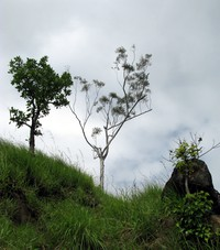 tree on Little Adams Peak