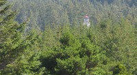 umpqua lighthouse in the trees