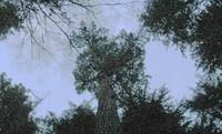 up through night trees mt si