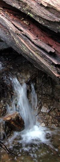 water under a log